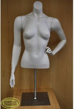 Torso Female 1/2 on Stand